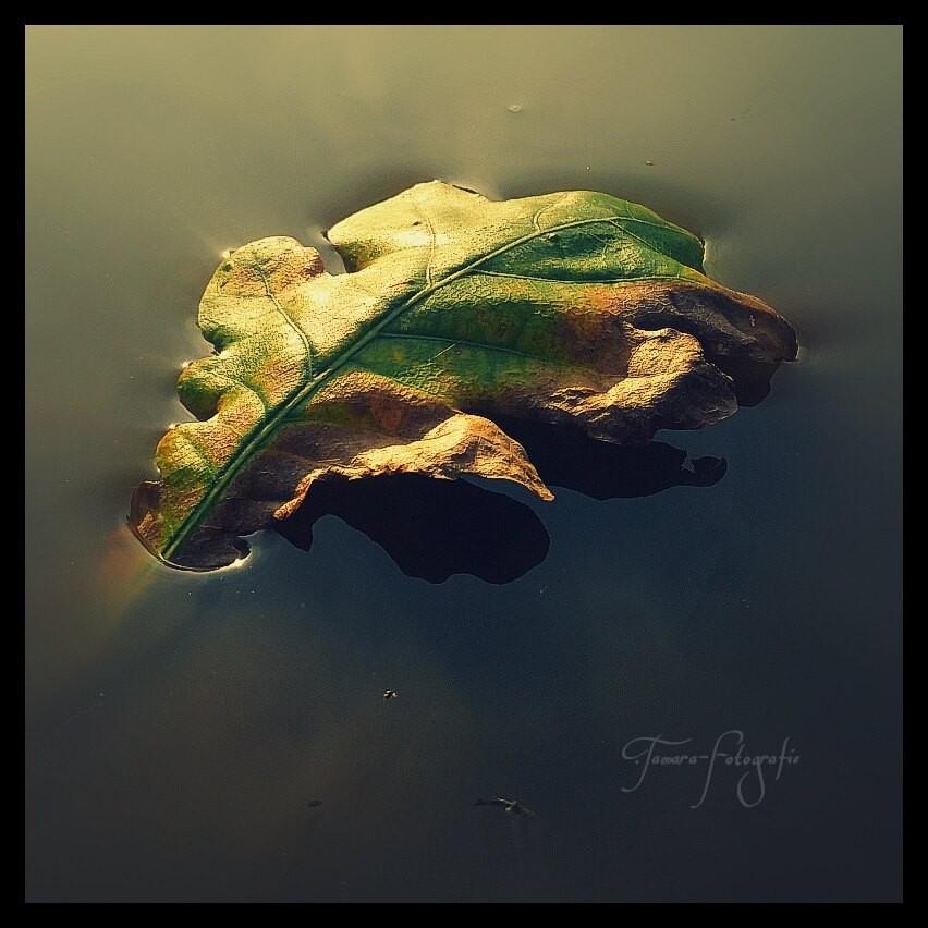 Die verwundeten Blätter sind gefallen.