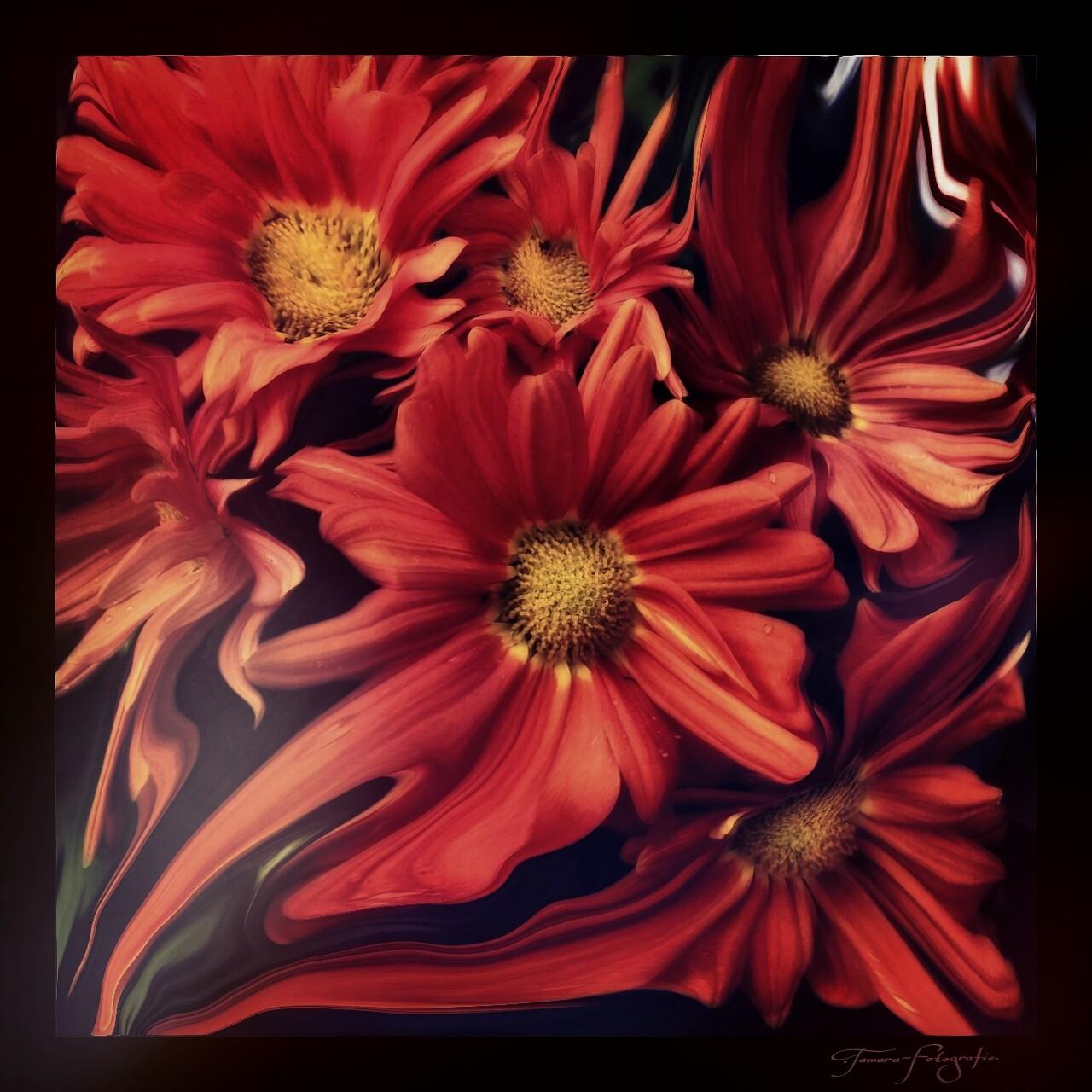 """Ich höre die lautlose Stimme der Natur: """"Geniesse die Schönheit des Herbstes und denke nicht an die Blumen des Frühlings. Man kann nicht beides gemeinsam erleben wollen."""""""