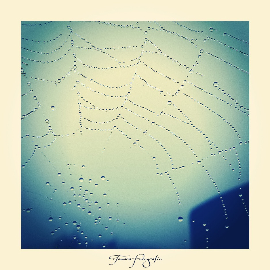 Neben einem Spinnennetz verblasst jedes menschliche Bauwerk.
