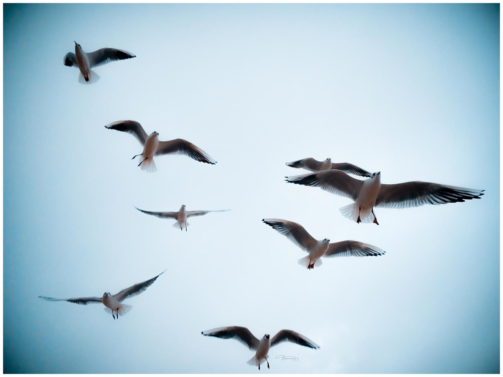 Wer nicht vom Fliegen träumt, dem wachsen keine Flügel.