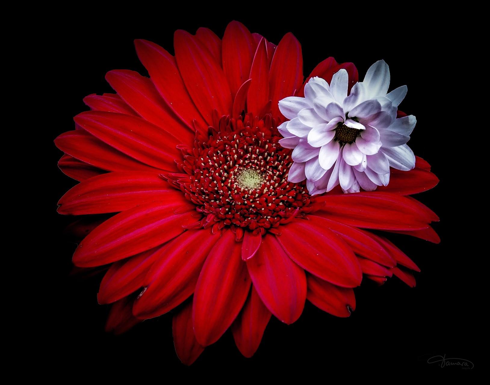 Gedanken an dich sind wie Blumen, genährt vom Wasser der Sehnsucht, wachsend im Licht der Liebe. ❤️