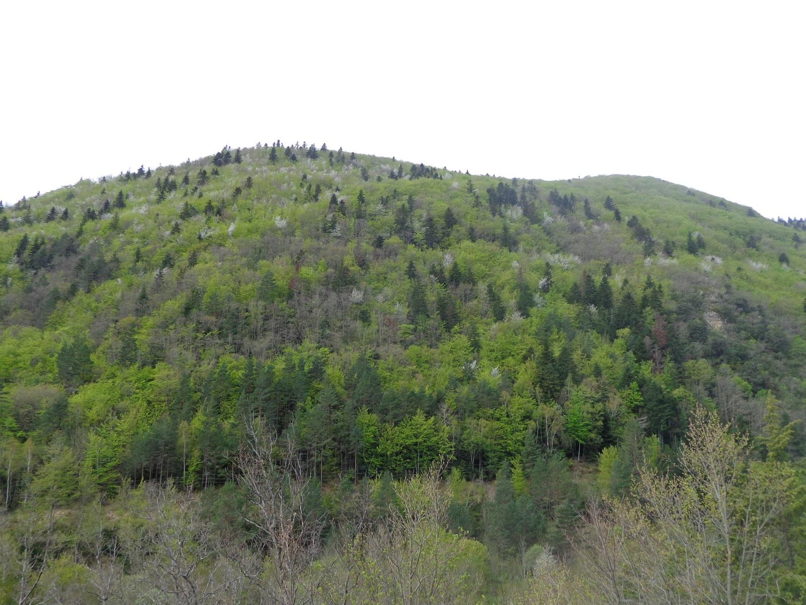 La vallée de la Rébenty après avoir quitté Axat vers La Fajolle et le col du Pradel. Sauvage.