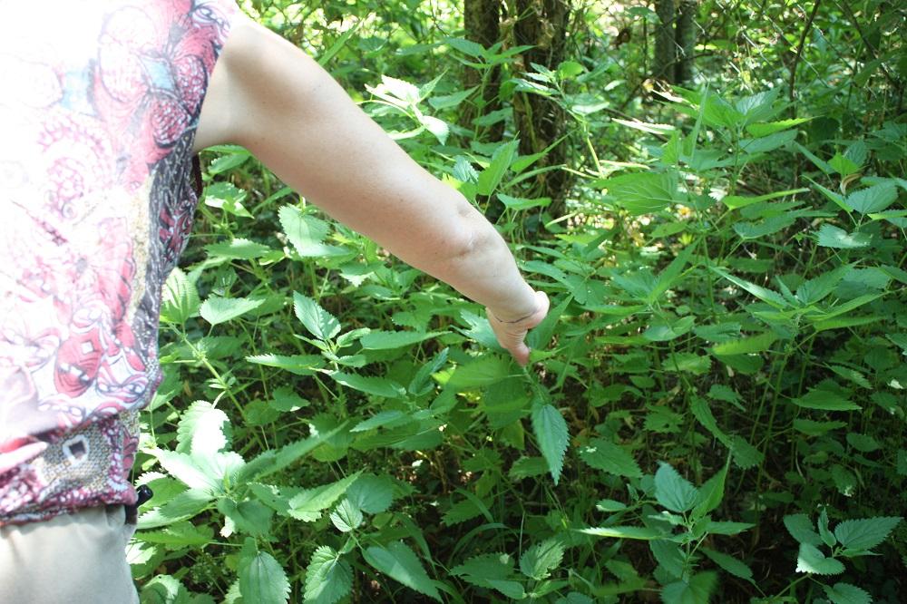 Cueillette d'ortie - Photo Les Plantes dans tous les sens