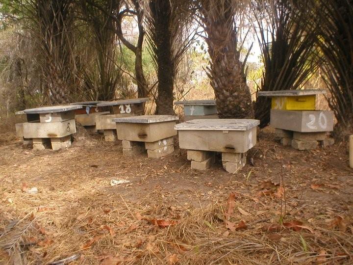 rucher du senegal en béton hausse en bois Djibril Diatta