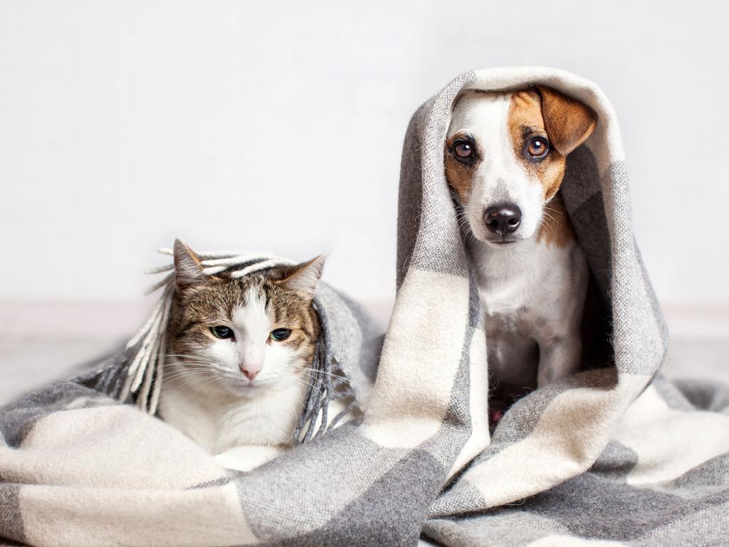 Futtermittelunverträglichkeit bei Hund und Katze entgegen wirken durch spezielle Fütterung (Diätetik)