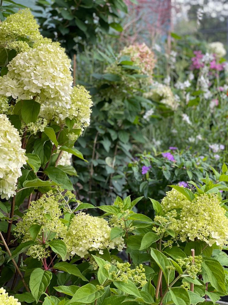 Saisonale Pflanzen
