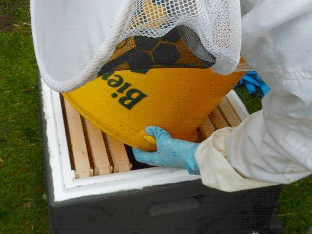 Als Kneul lassen sich die Bienen regelrecht gießen.