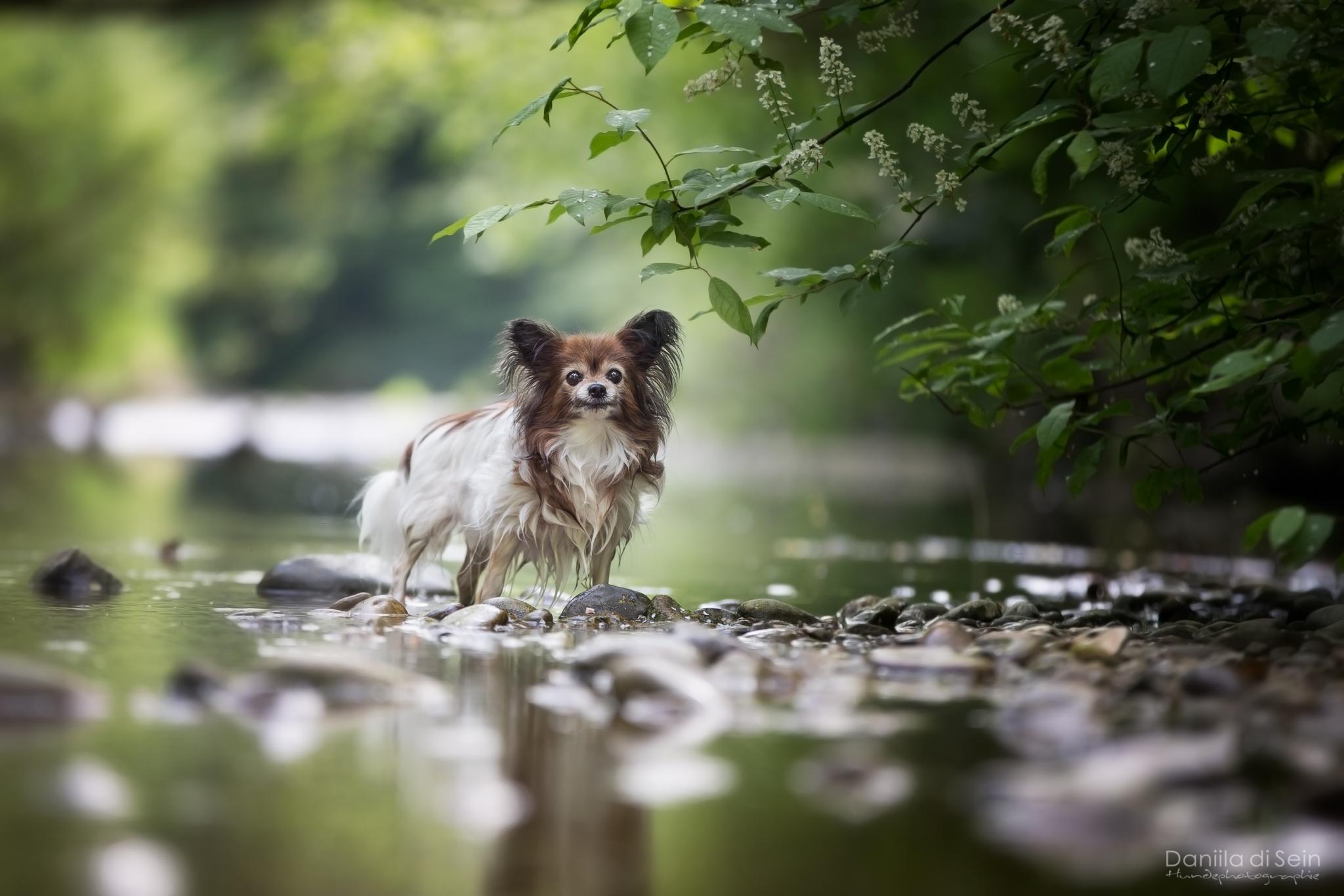 Hundefotografie Outdoor - Daniila di Sein, Zürcher Oberland