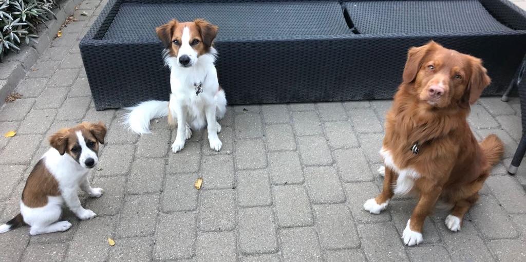 Believe, Cosmo und Pepper