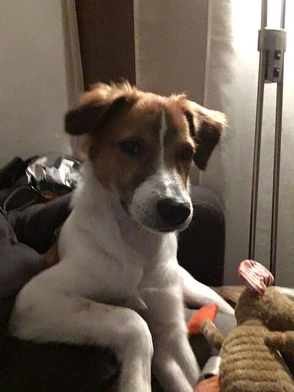 Benji 6 Monate