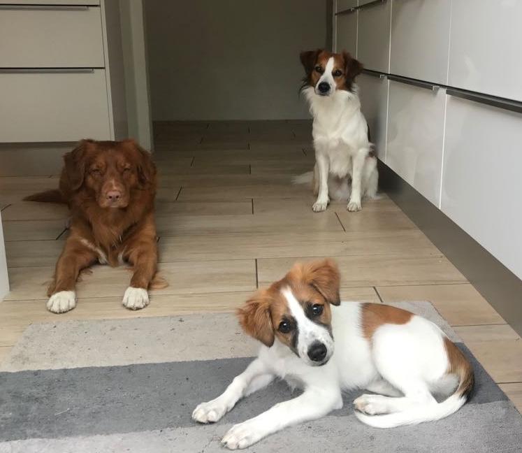 Pepper, Cosmo und Believe