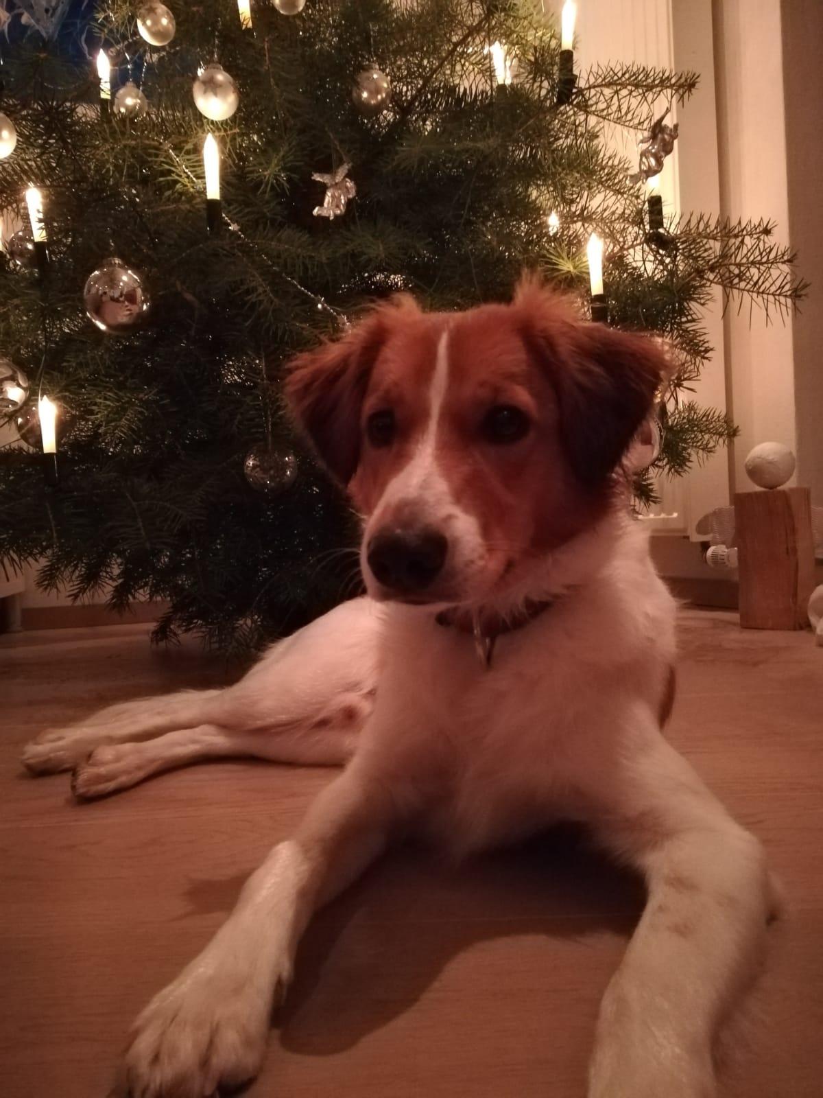 Bailey 8 Monate