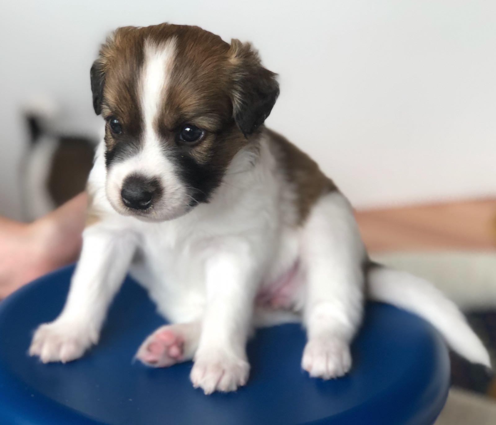 Bea 5 Wochen alt