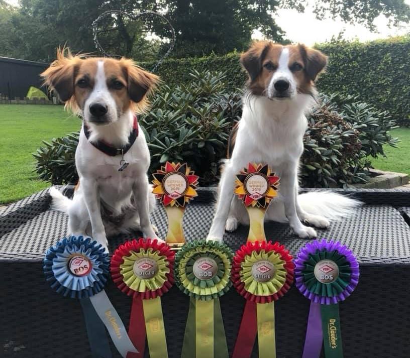 VDH-Sieger Leipzig und Greman Winner 2019 Believe und Cosmo