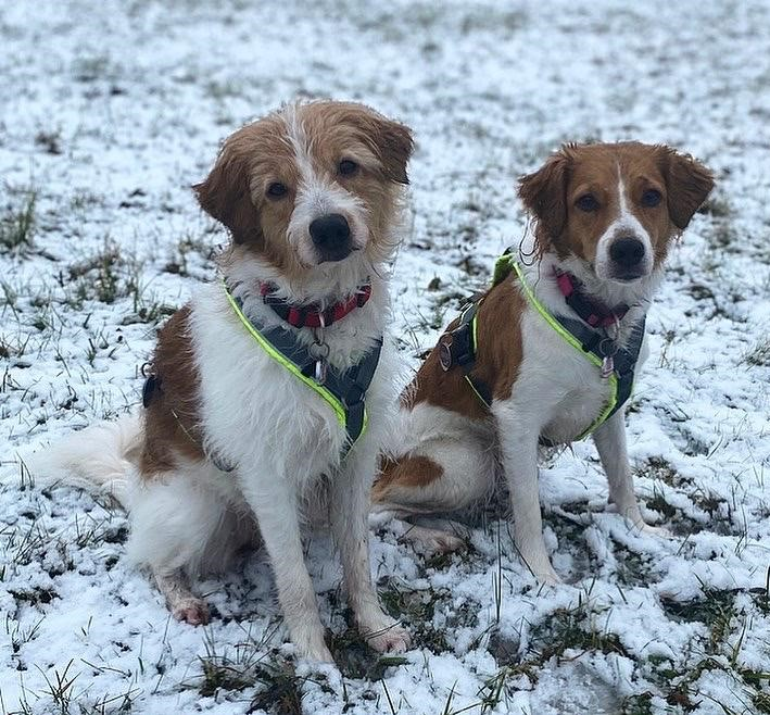 Januar Alina und Baila