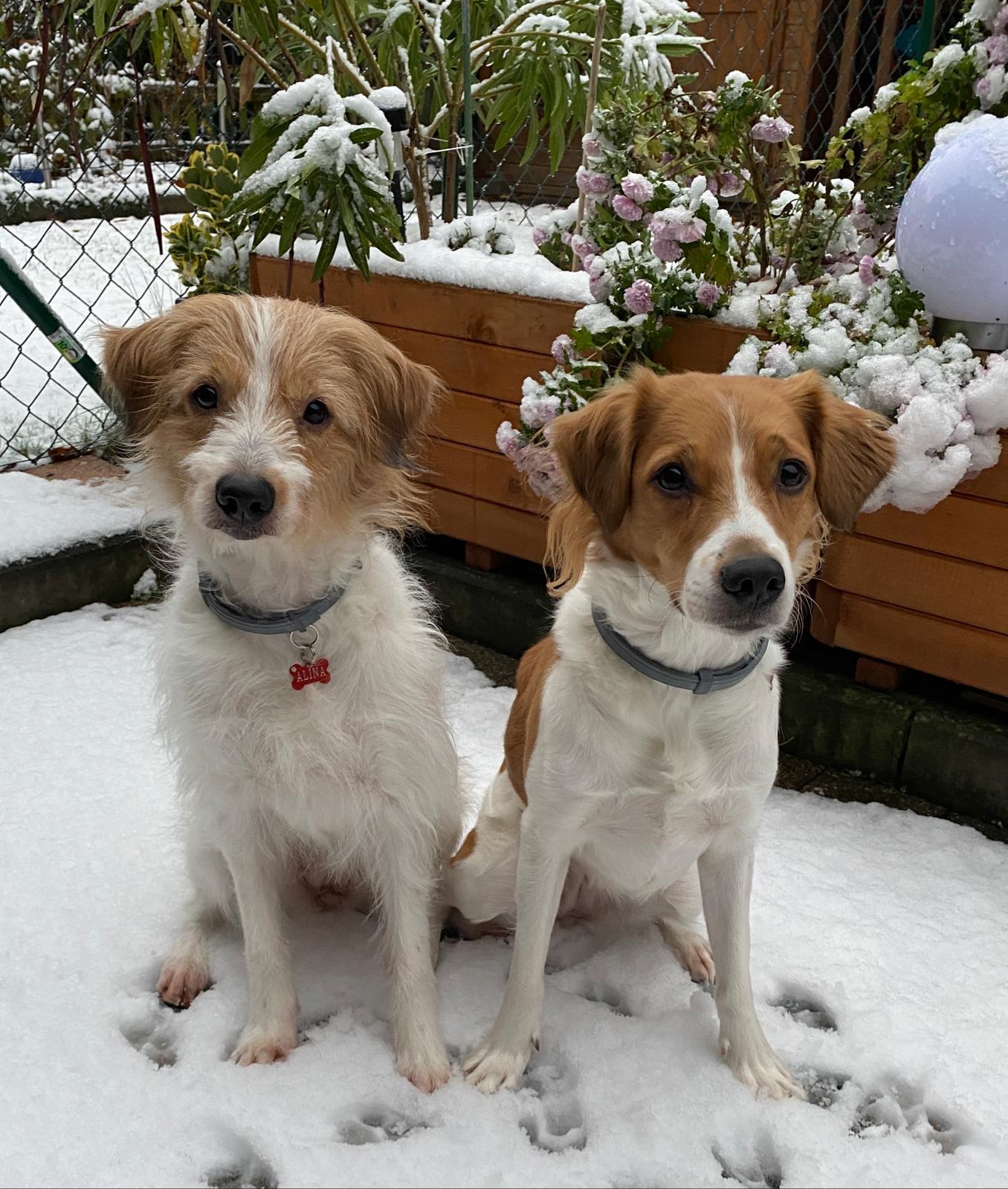 Alina und Baila 01. Dezember