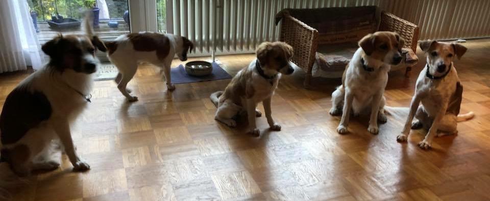 Cosmo, Believe, Bea, Beetje und Amy