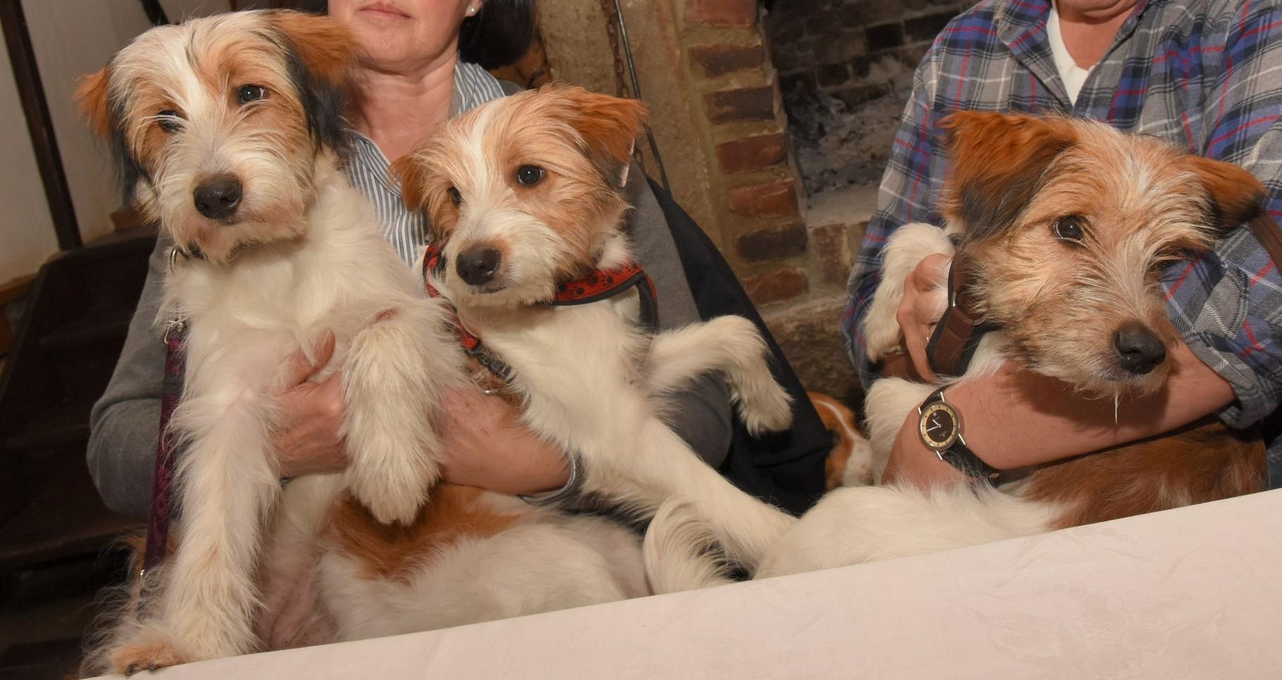 Ayla, Alina, Abby (fast 6 Monate)