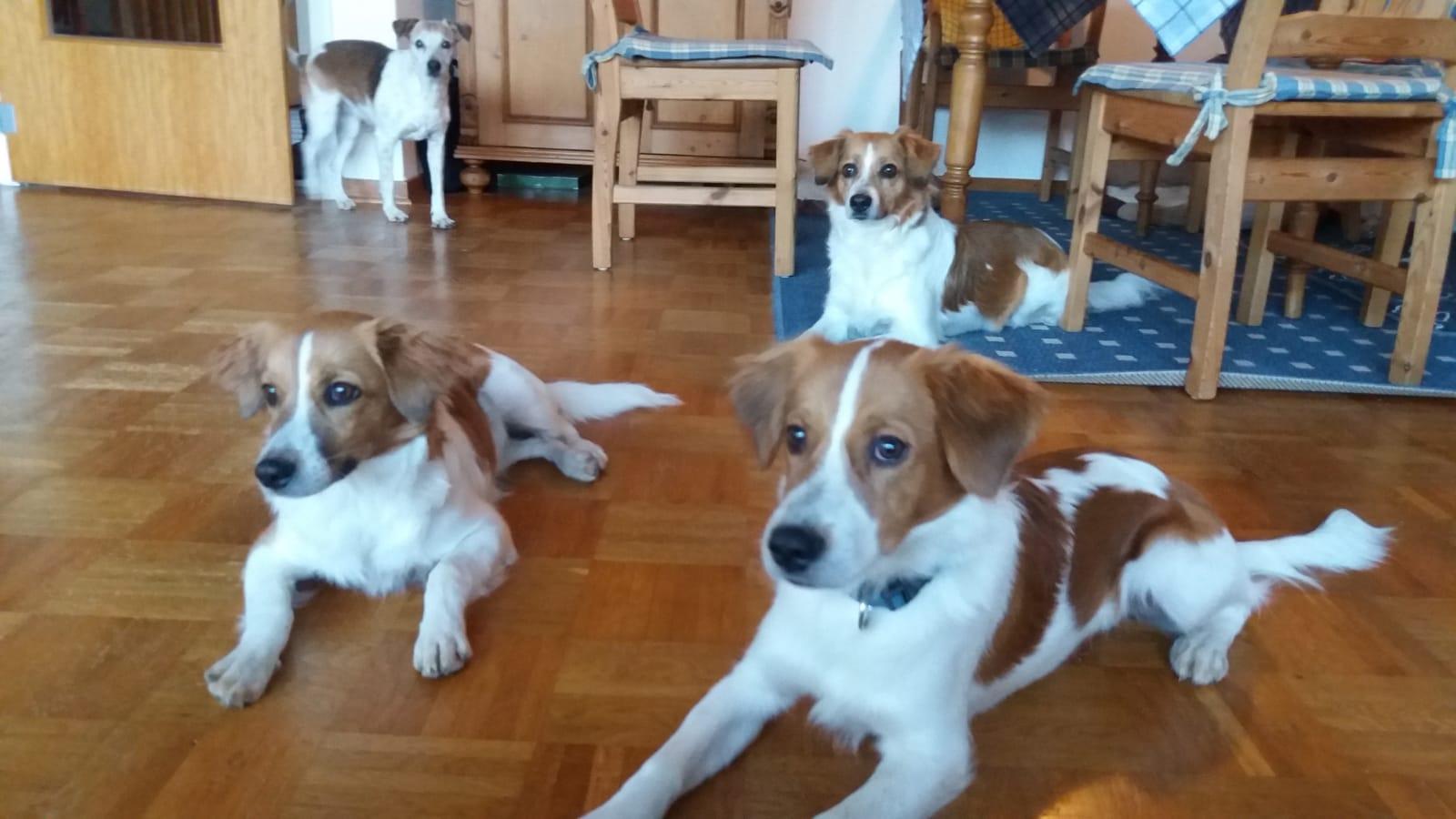 Basti bei Bea, Beetje und Amy