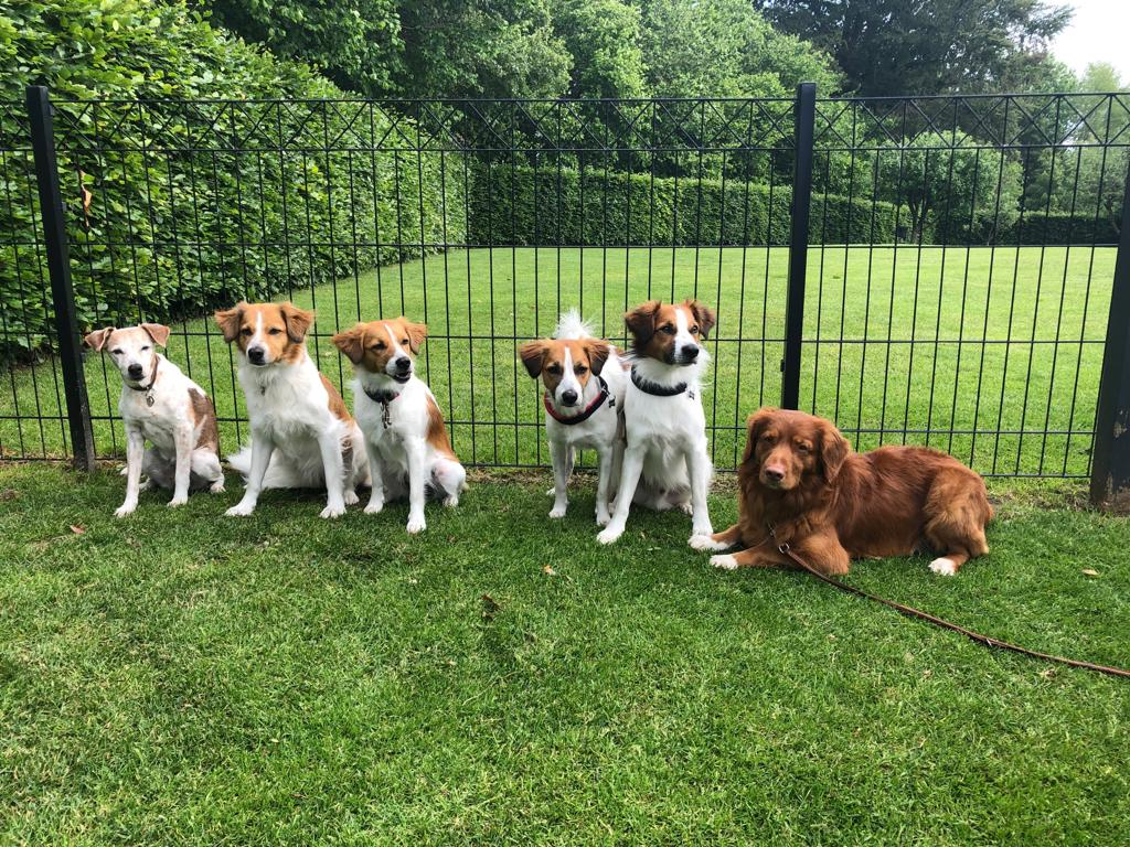 Amy, Beetje, Bea, Believe, Cosmo, Pepper