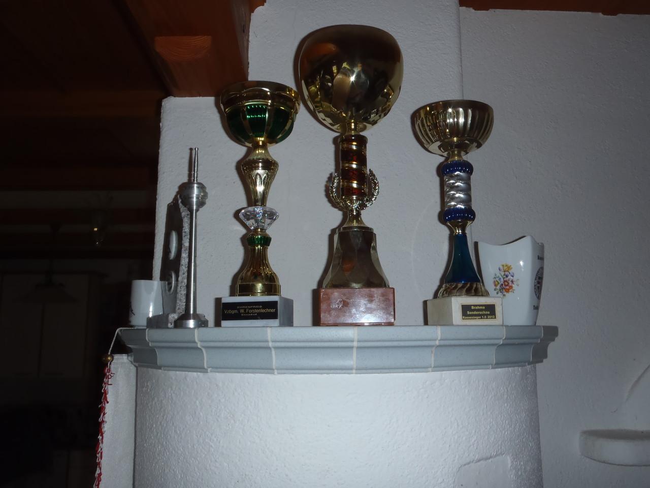 Meine Pokale von den letzten 3 Ausstellungen