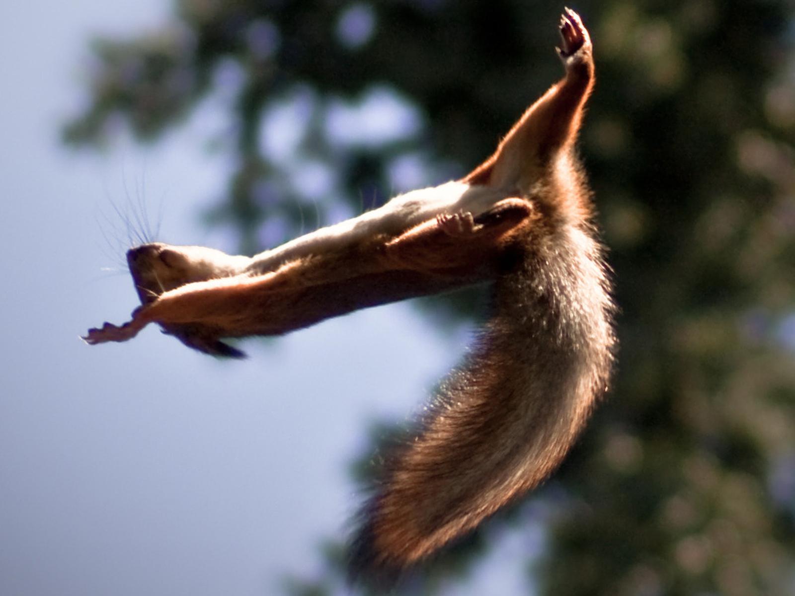"""""""Da fallen ja die Eichhörnchen von den Bäumen."""""""