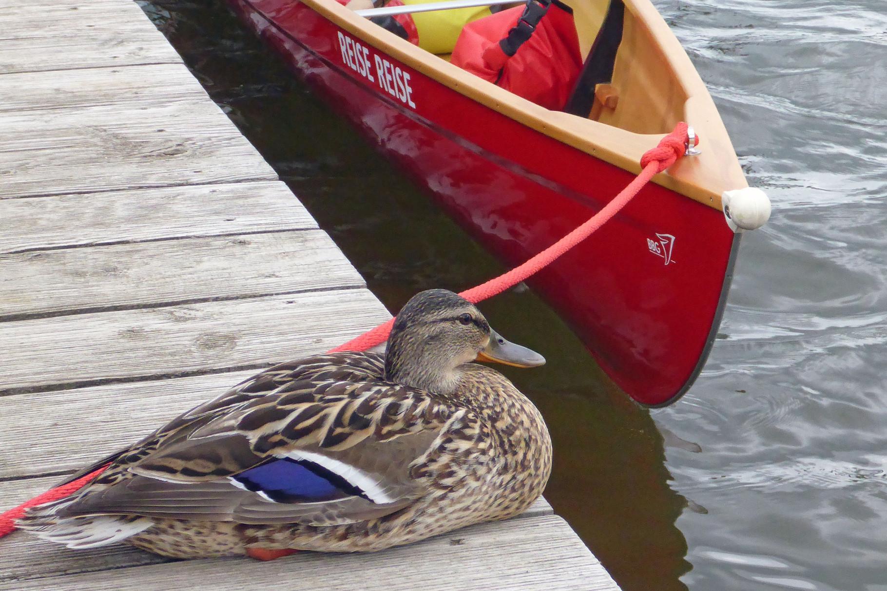 Die Ente bewachte Reise Reise.