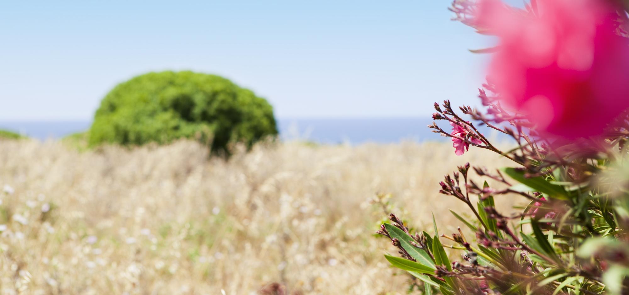 Blumen, pink, Meer, Sizilien, Fotografie, Katharina Steiner, Kath Viusal