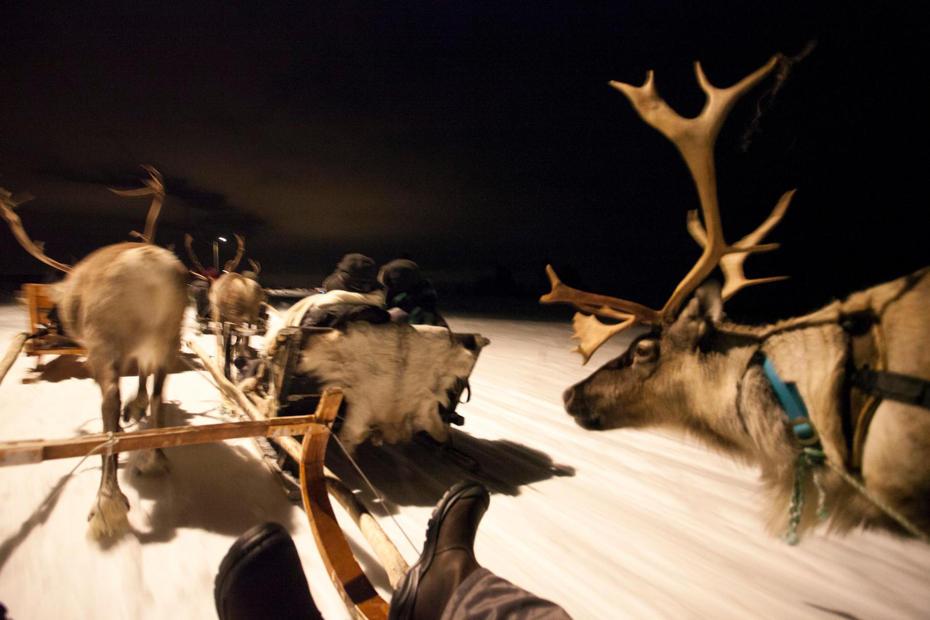 Balade en traineau de rennes
