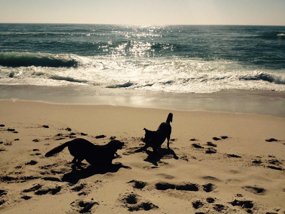 Yoga mit Tieren, herabschauender Hund, Leben am Meer, KaSa-Yoga.eu