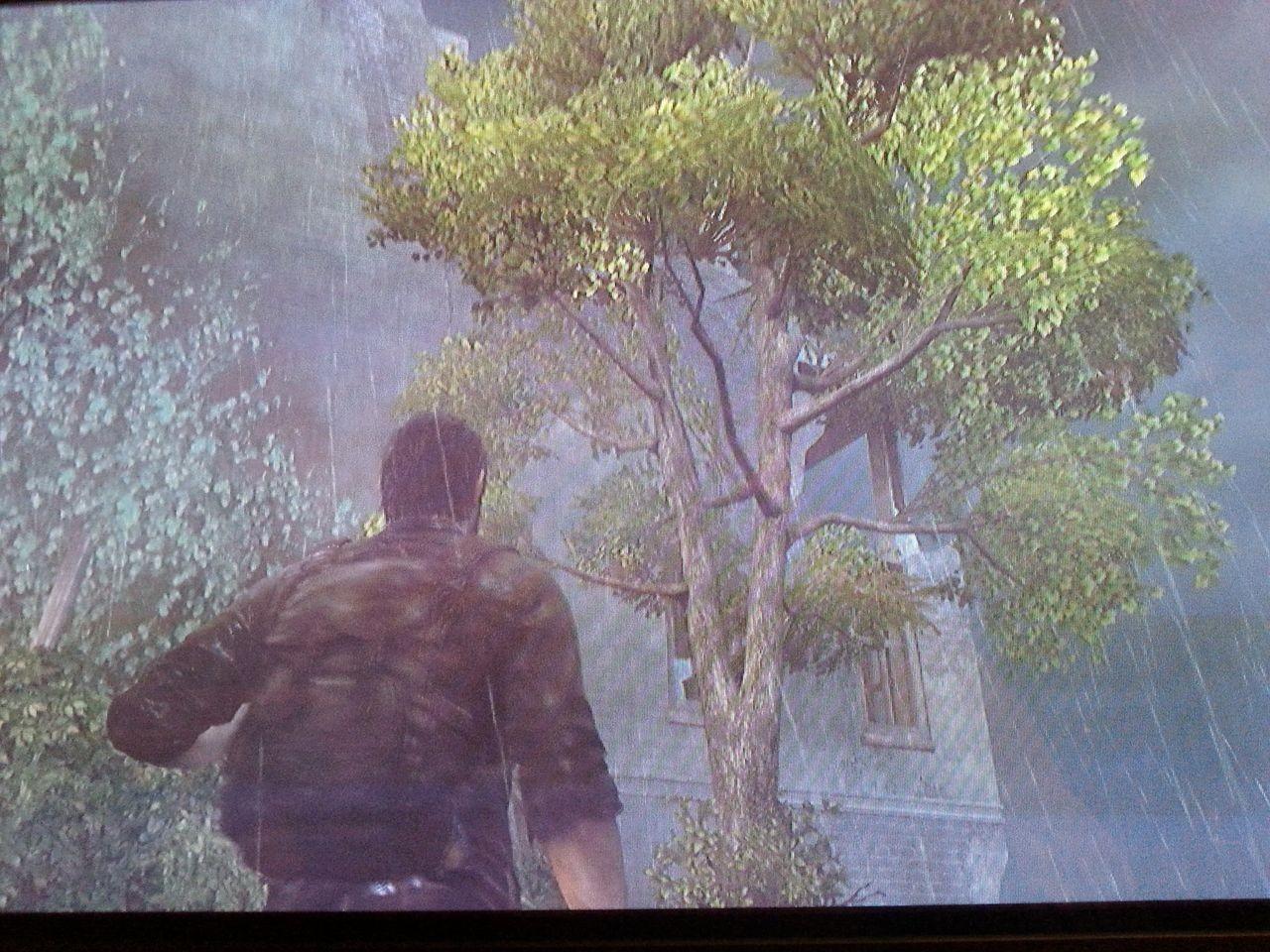 Zweiter Marken-Fundort im Baum vor dem Büro-Gebäude