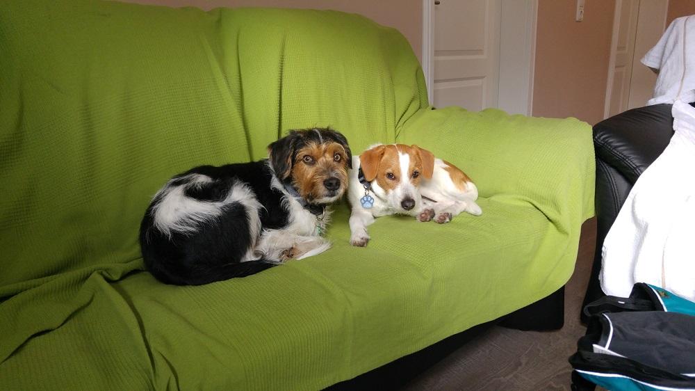 Kuscheln auf dem Sofa