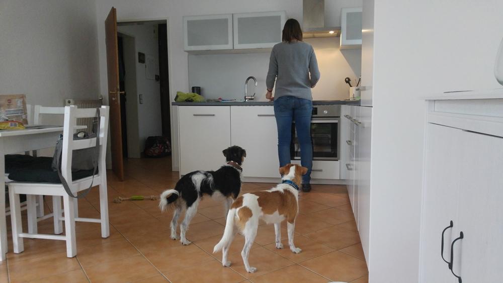 Die erste Mahlzeit wird vorbereitet...