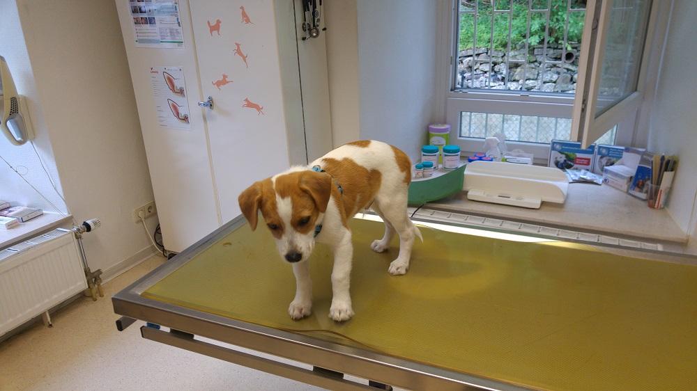 Digga´s 1. Tierarztbesuch toll gemacht!