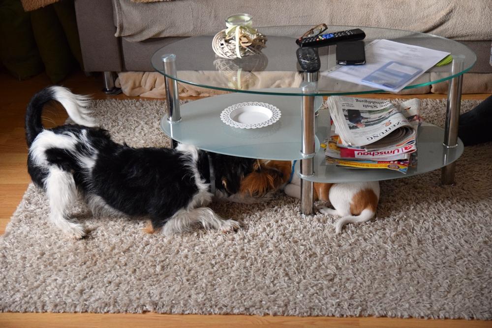 Bardur passt nicht mehr unter den Tisch....