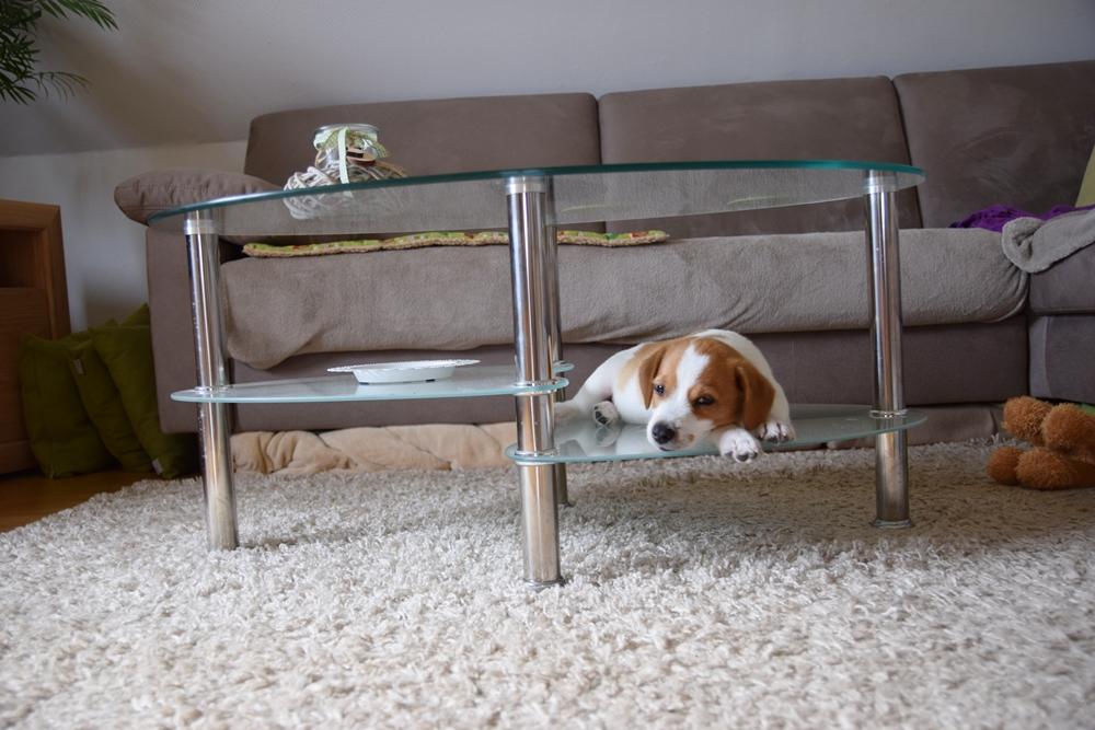 Digga und sein Tisch...