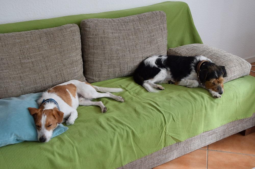 Beide Jungs sind müde...