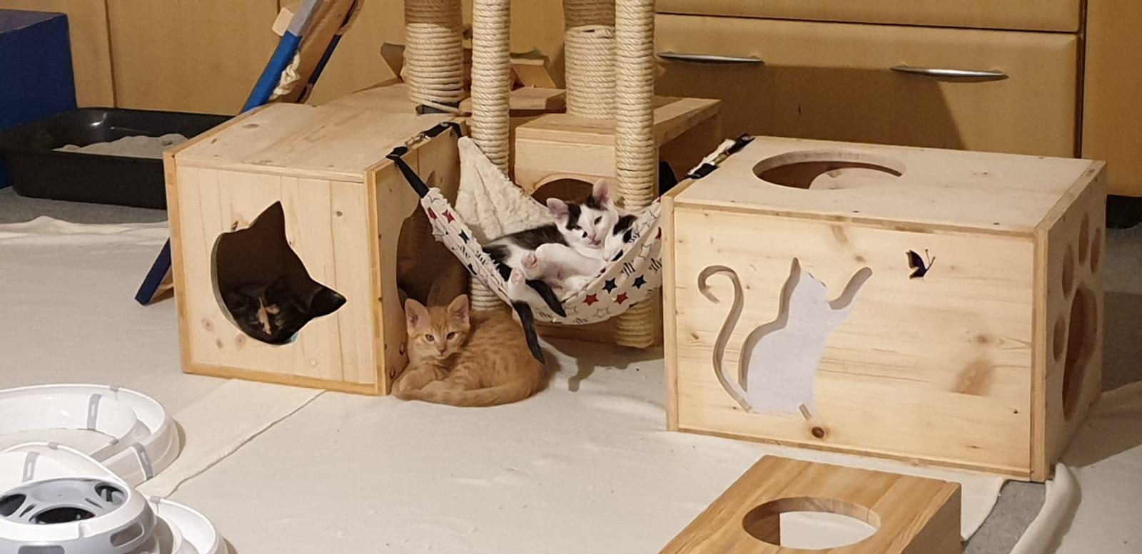 DIY für Katzen - Baby Spiel- und Lernstation