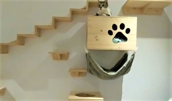 Catwalk für ältere Katzen