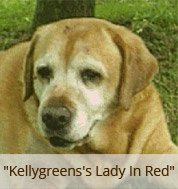 Dickens dam, Kellygreen Lady in Red
