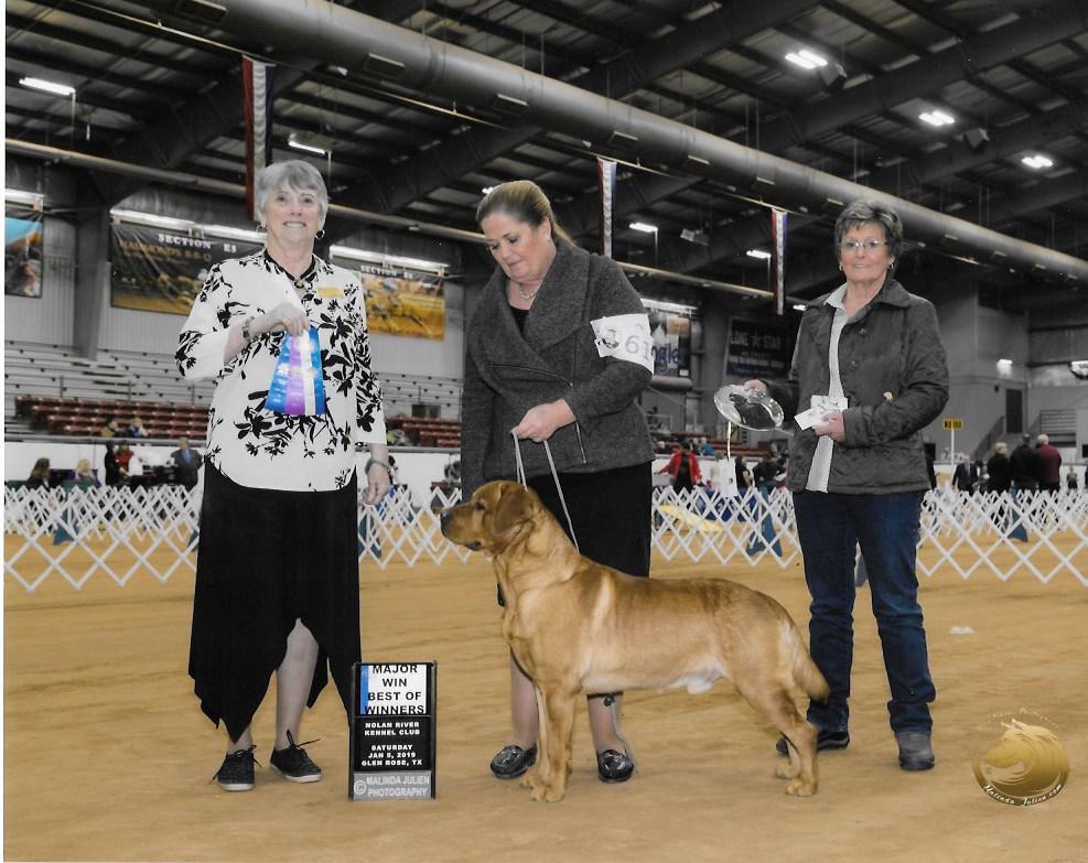 Iron Hill Retrievers - Golden & Labrador Retrievers Iowa