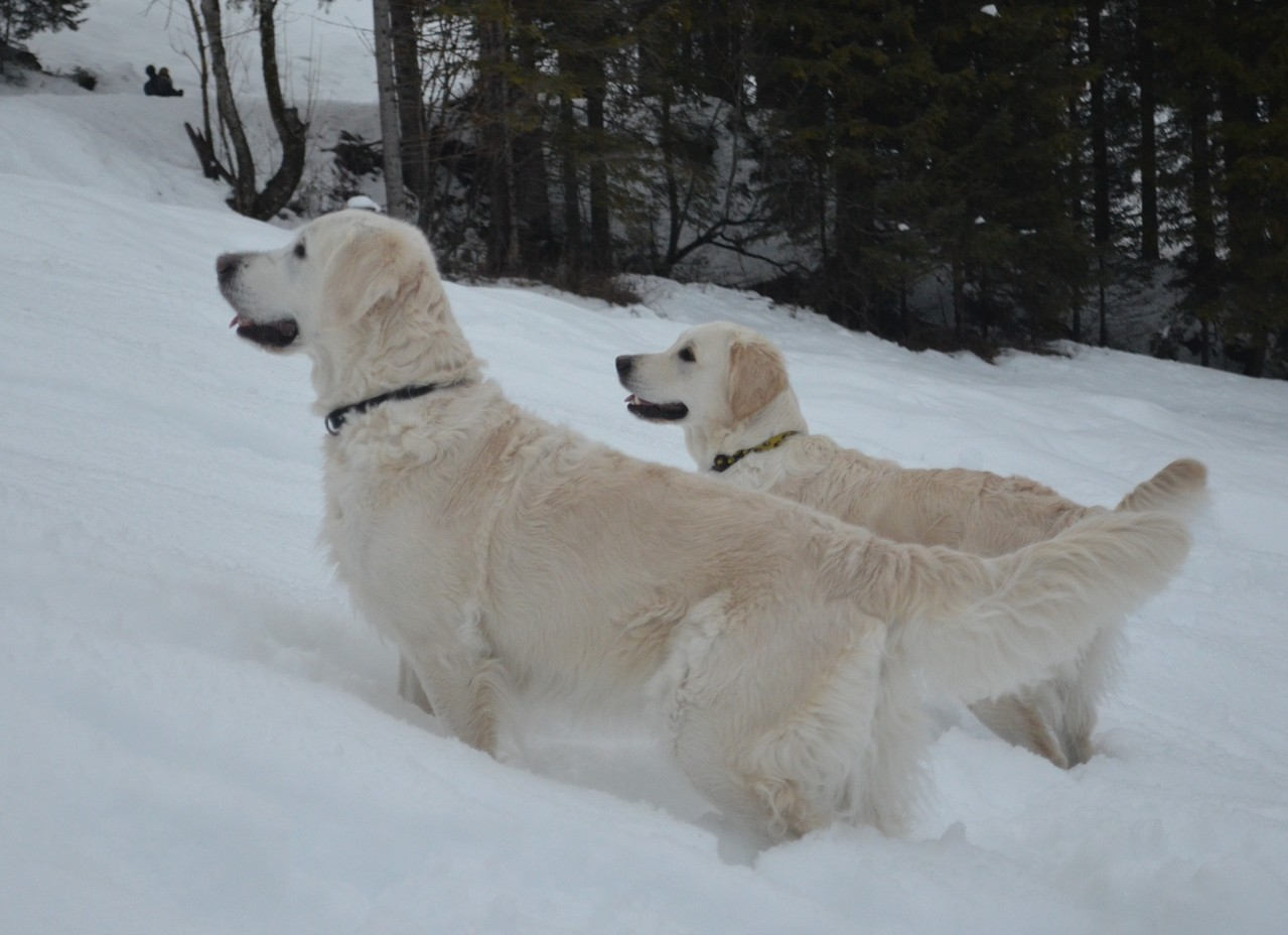 warten auf Schneebälle