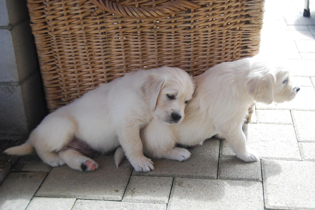 so ein Kissen ist bequem