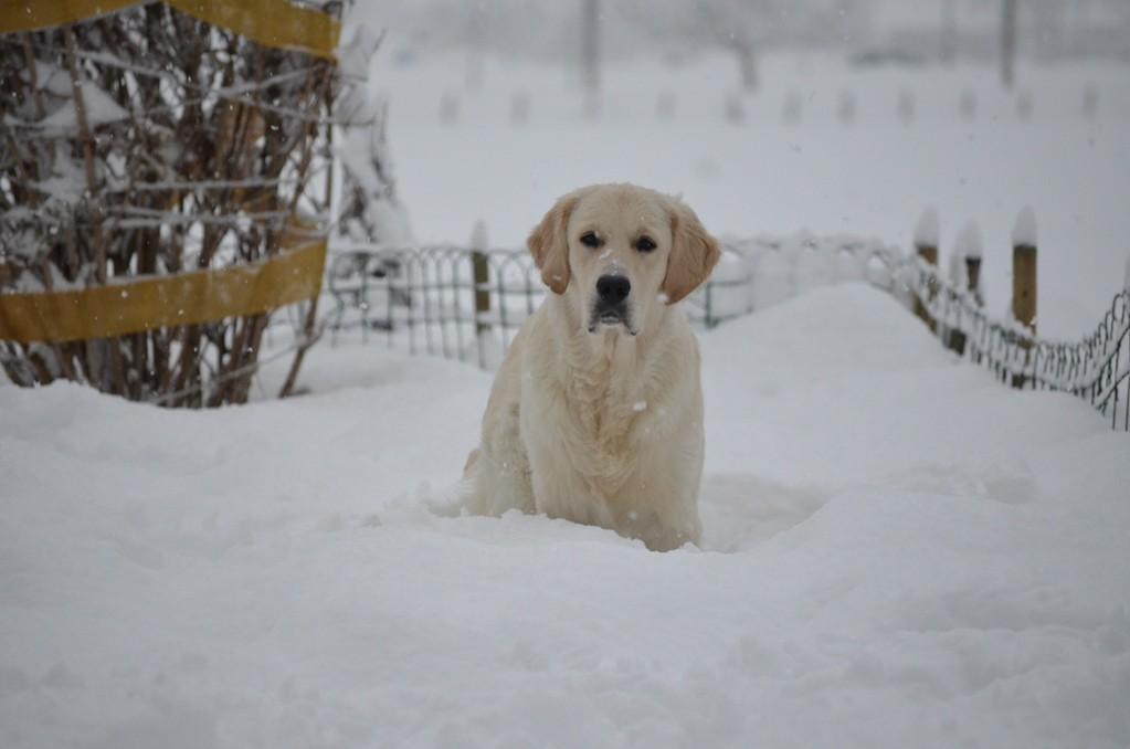 warten auf Schneebälle....