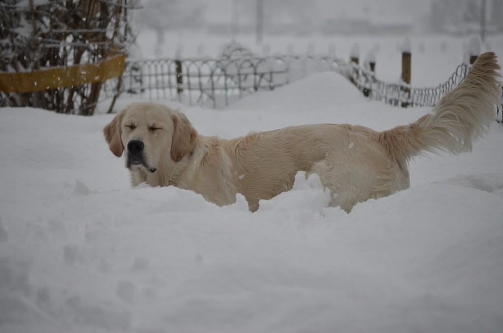 mit so viel Schnee hat wohl niemand gerechnet
