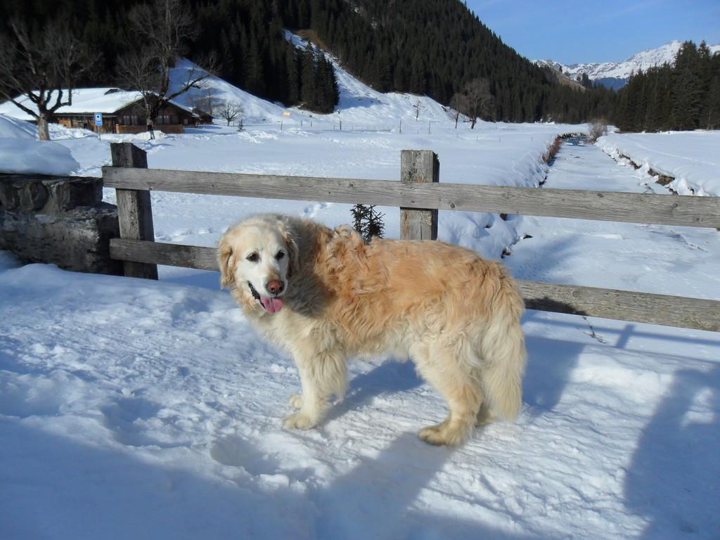 Winter 2011, Sina ohne Haro im Rosenlaui