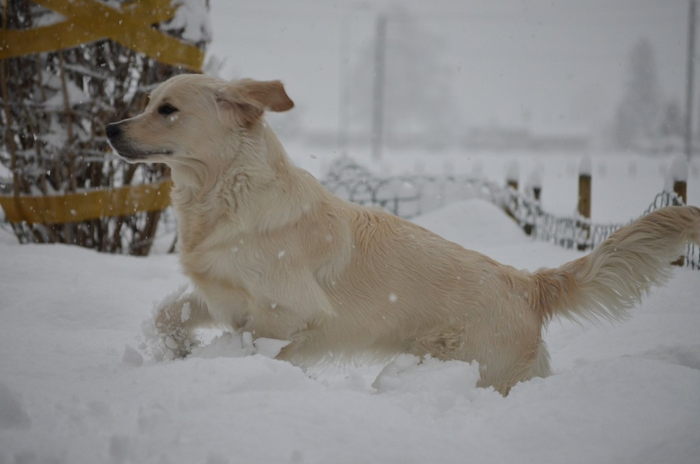 Fly muss seine Muskulatur trainieren, das hat er nun im Schnee automatisch gemacht