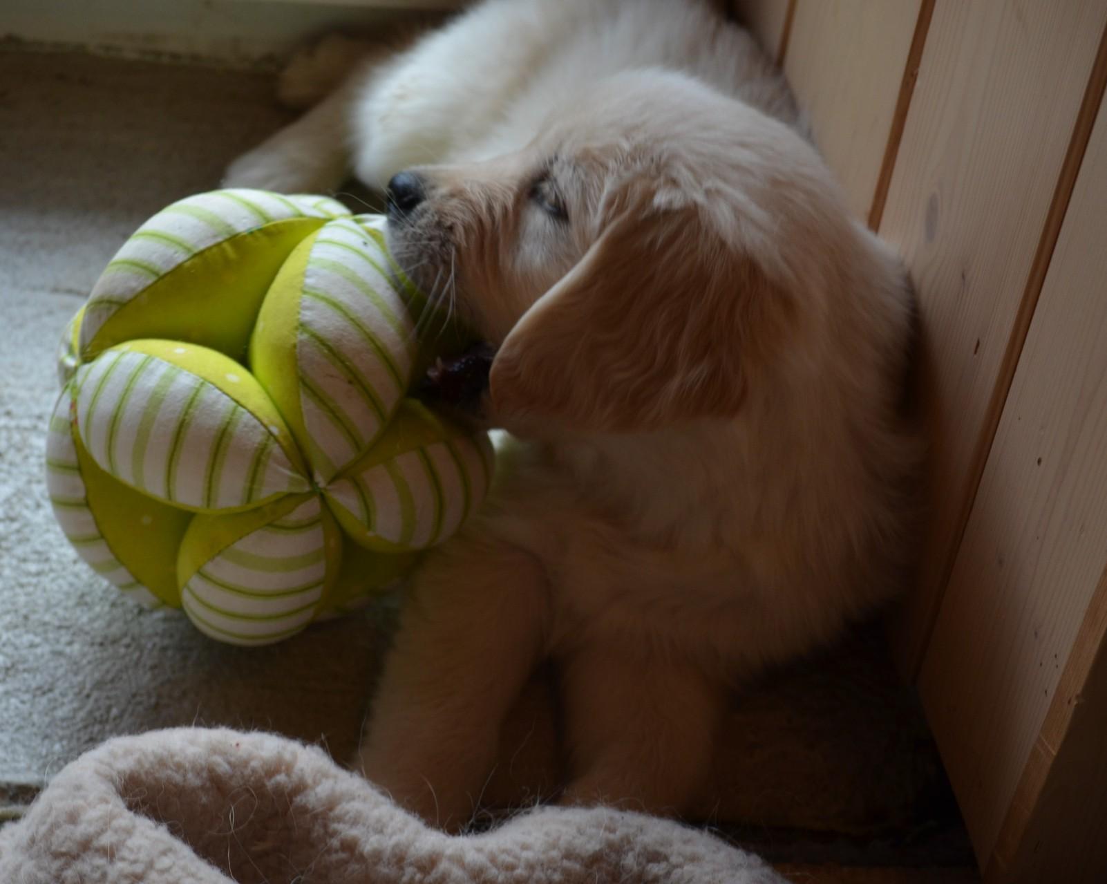 sooo, ausgeschlafen, jetzt will ich spielen