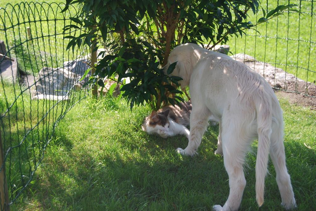 Kira ist immer noch sehr interessant und spielt liebend gern mit ihm