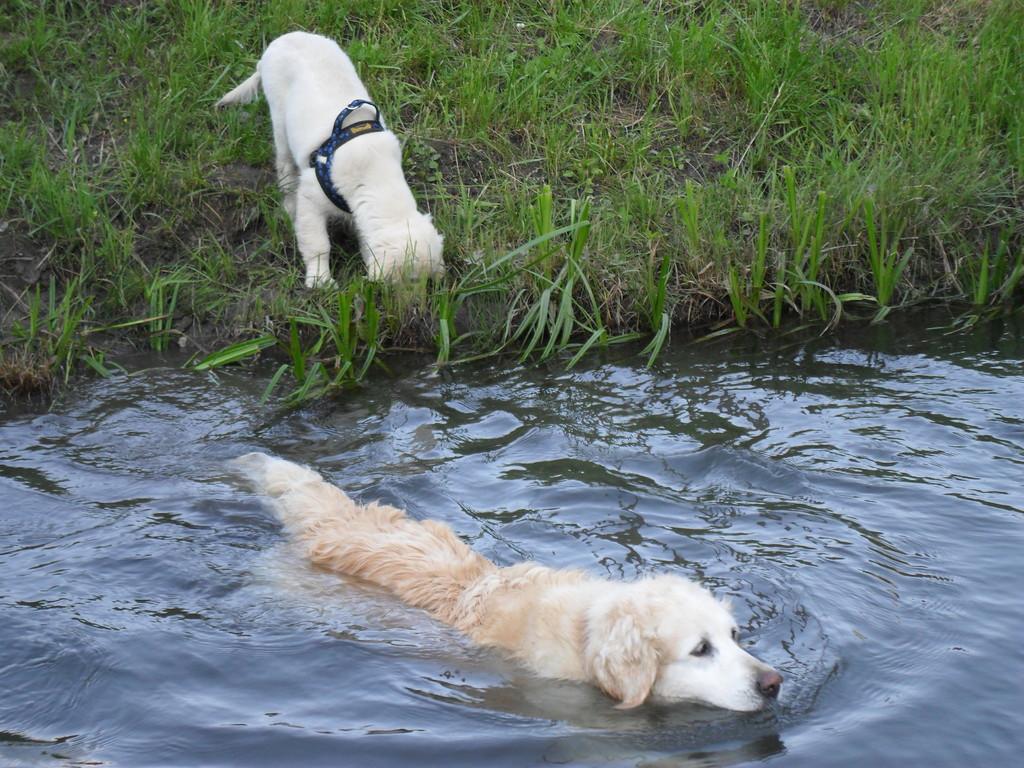 Sina zeigt Fly, wie man schwimmen kann, ihm ist`s noch nicht ganz geheuer